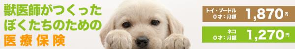 PETSBEST(ペッツベスト)|大切なペットのための医療保険