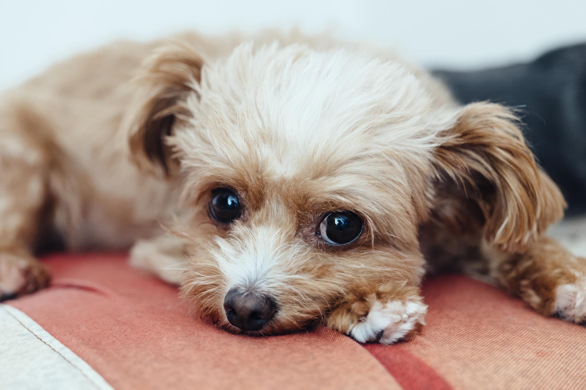 獣医師さんが教える!犬の病気とペット保険のこと