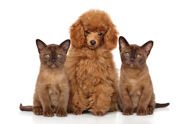 獣医師さんが教える!ペット保険の必需性とは・・・